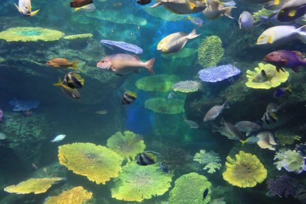 Siam Ocean World Bangkok